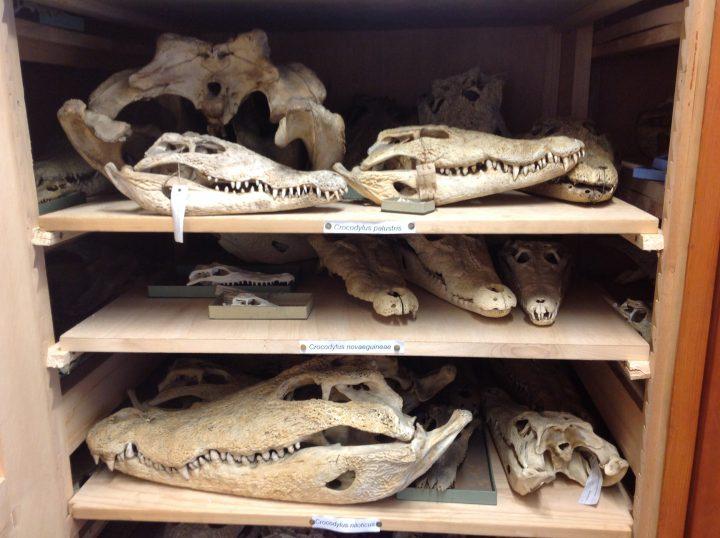 Herpetologie Sammlung