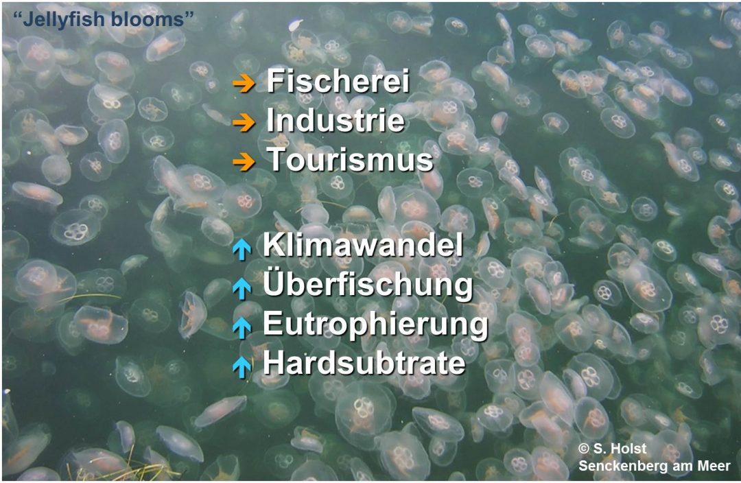 Jellyfish Blooms deutsch