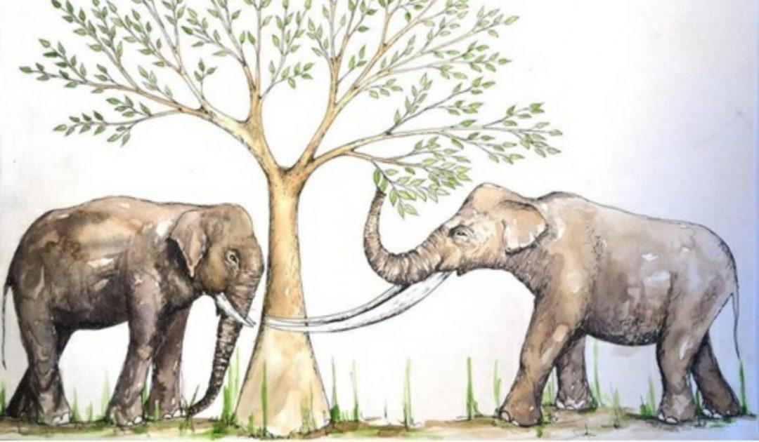PM Elefant 17.04