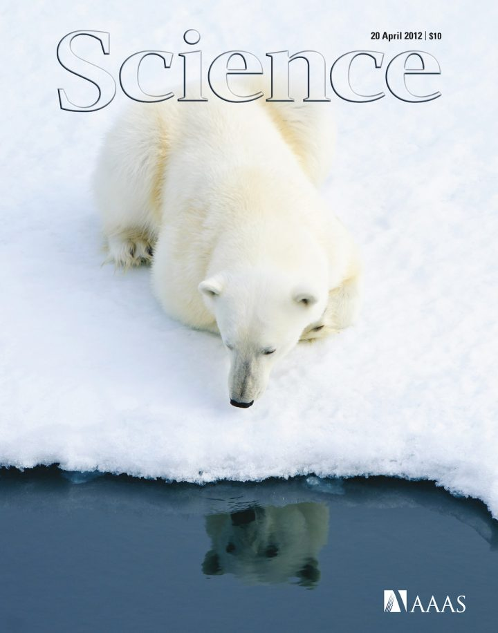 SBiKF_AG_Janke_Eisbaer Science Cover 20 Apr 2012