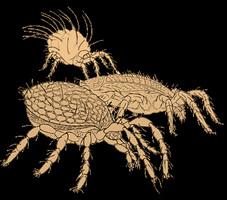 Arachnida Grafik_klein