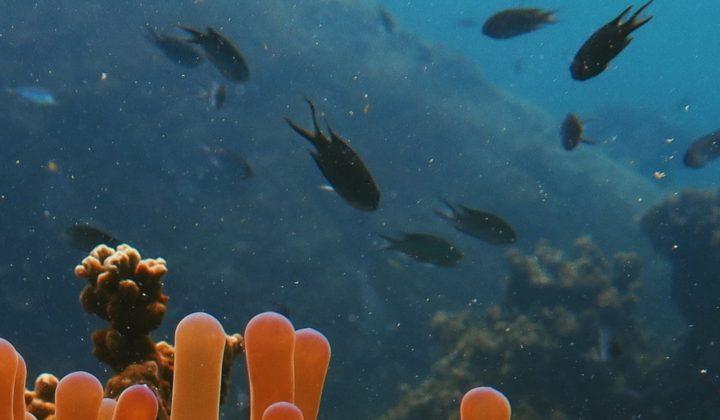 Biodiversität, Systematik und Evolution