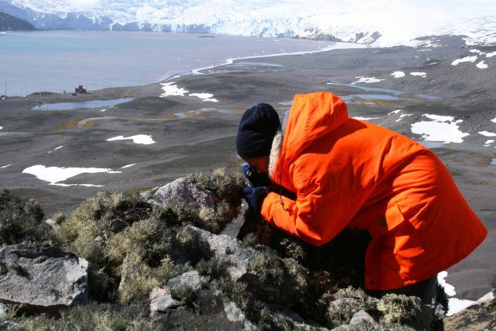 Flechtensuche in der Antarktis