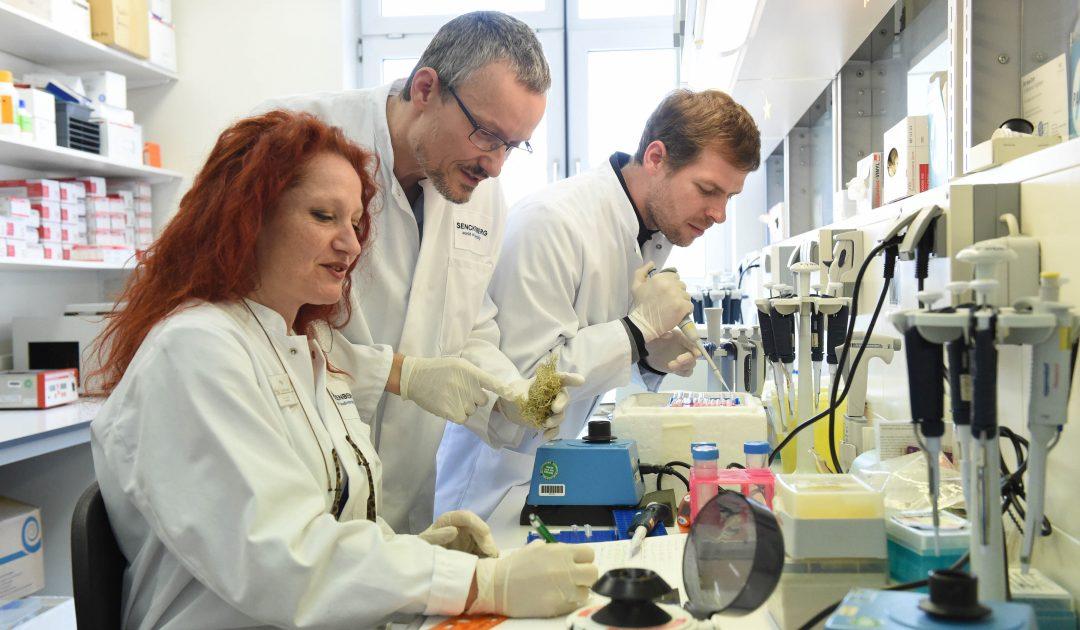 Grunelius Möllgaard Labor