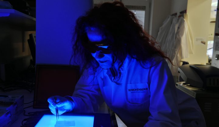 Heike Kappes bei Molekularuntersuchungen