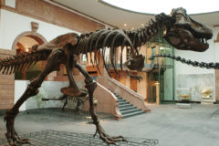 Lichthof T.rex