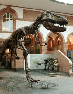 Lichthof T.rex_Foto