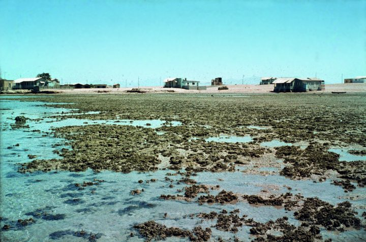 Marine Evertebraten II Forschung 07_Ghardaqa