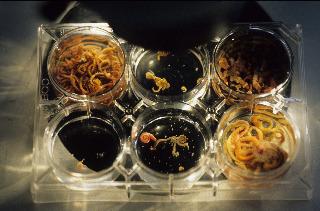 Marine Evertebraten II Forschung Roscoff 1996 _318-1