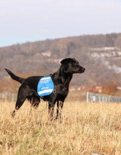 Mitarbeiterfoto Hund