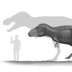 Pm Tarbosaurus 26.06.2019