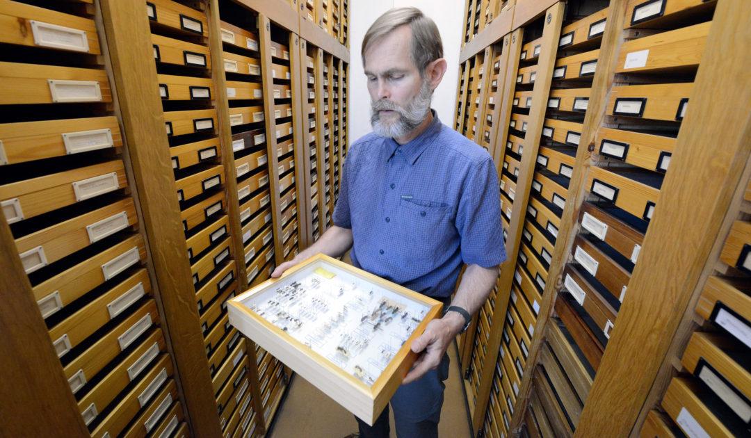 Sammlung Entomologie Dr. Bernhard Seifert Görlitz