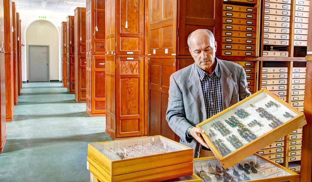 Sammlung Entomologie Dr. Damir Kovac