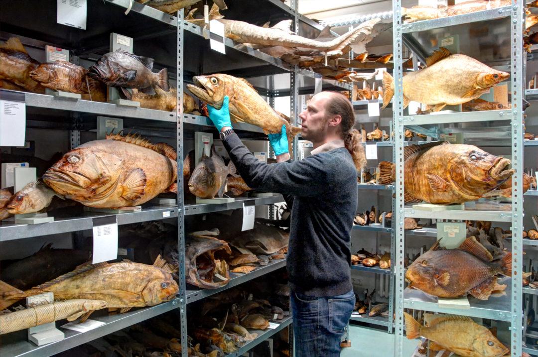 Sammlung Ichthyologie Dr. Tilman Alpermann