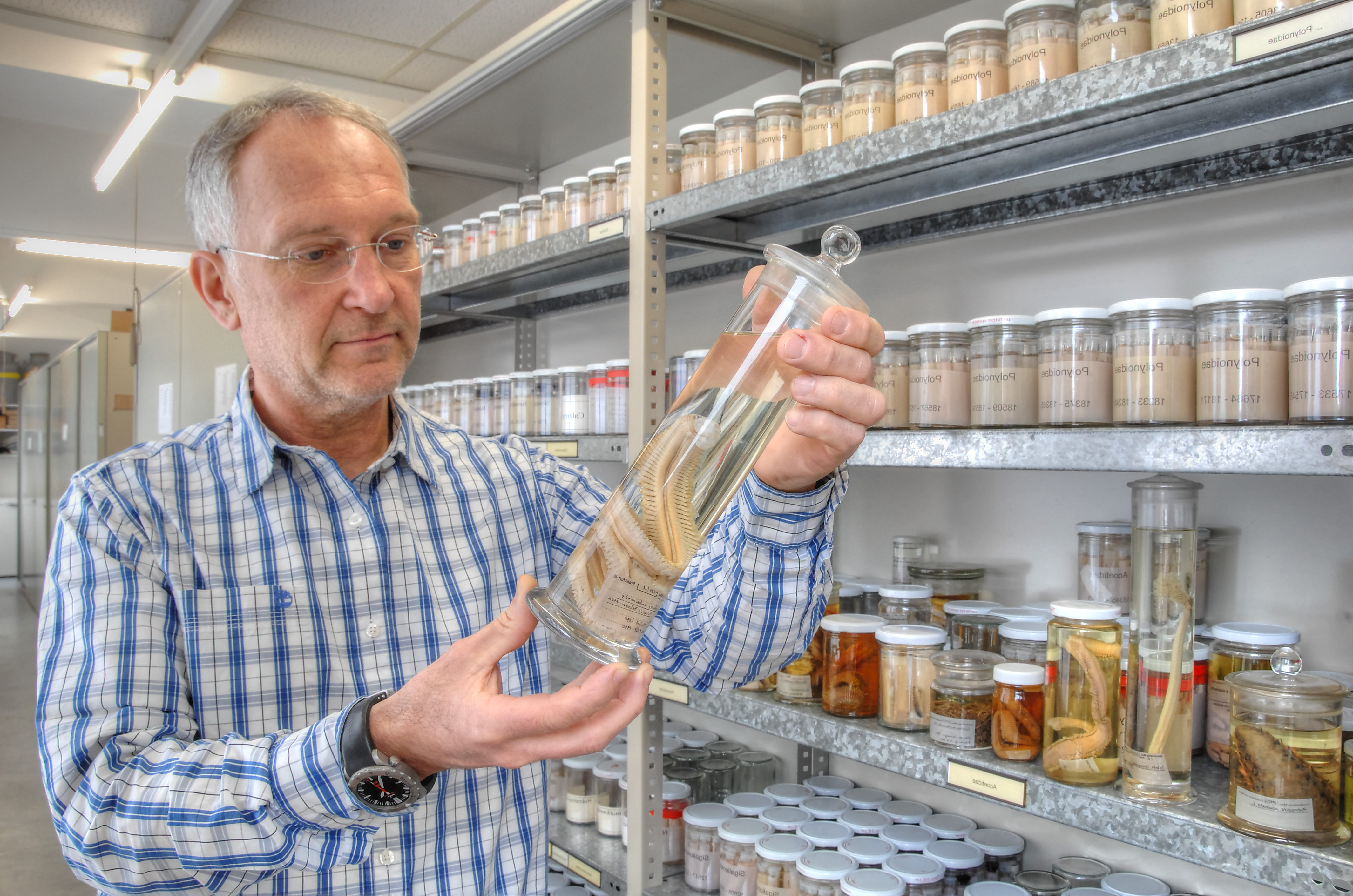 Sammlung Polycheaten Dr. Dieter Fiege