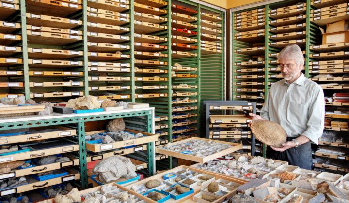 Sammlung fossile Cnidaria Dr. Eberhard Schindler