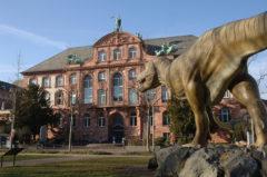 Senckenberg Naturmuseum Frankfurt