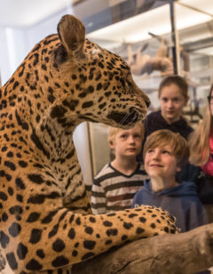 Senckenberg Naturmuseum Frankfurt_Besucher vor Leopard