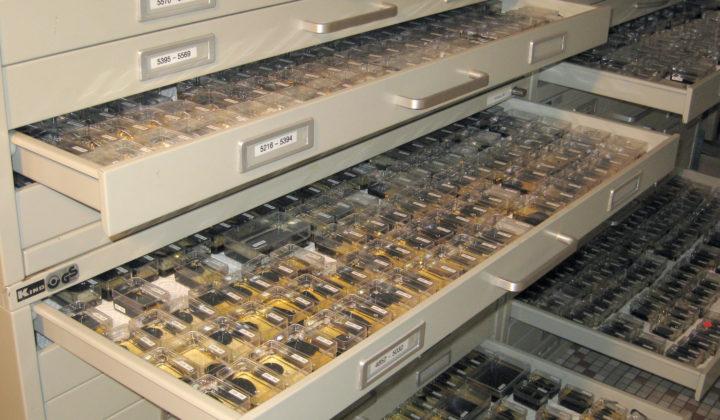 """Die Sammlung der """"Messel-Invertebraten"""""""