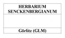 Herbarium Senckenbergianum Logo_Görlitz