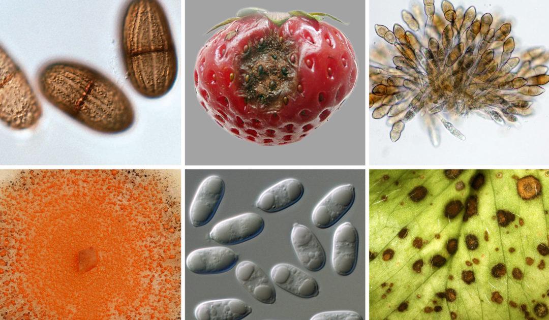Mykologie_Key Visual