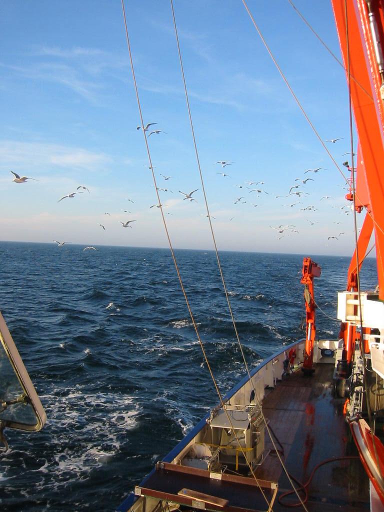 Zooplankton Pic14_Baltic Sea cruise