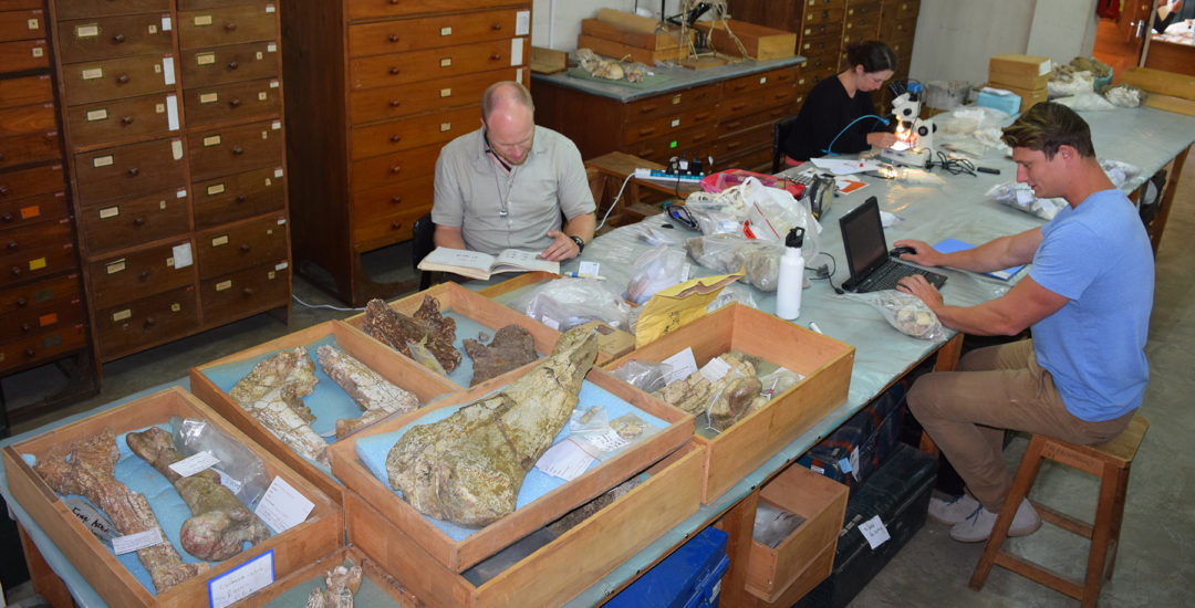 Forschung Paläomammalogie Messel