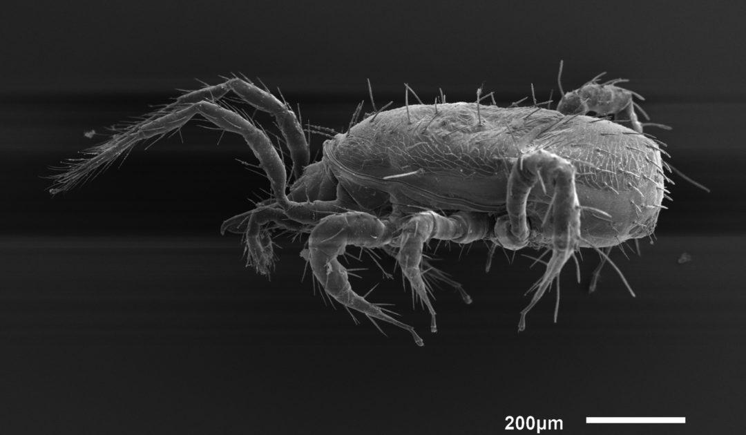 Mikroskopische Aufnahme Arachnida