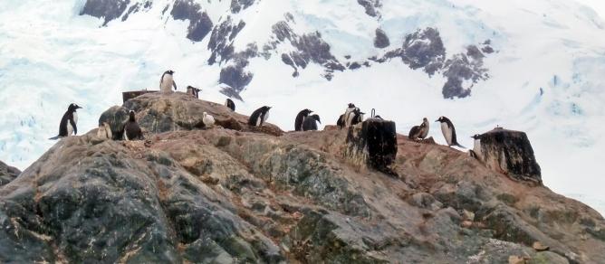 Projekt Antarctis_Bild_klein