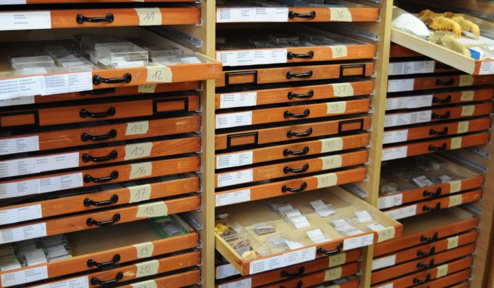 Sammlung Paläomammalogie