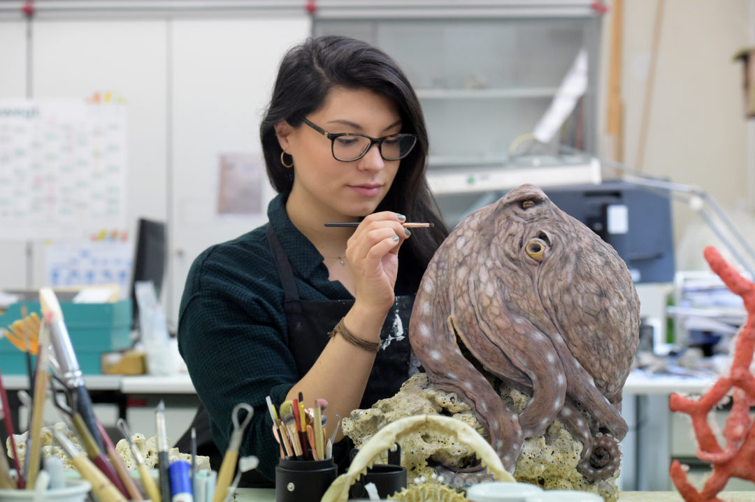 Anna Frenkel u Modell Octopus cyanea