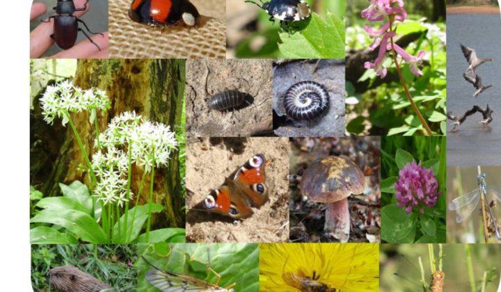 Artendatenbank auf Homepage Gelnhausen
