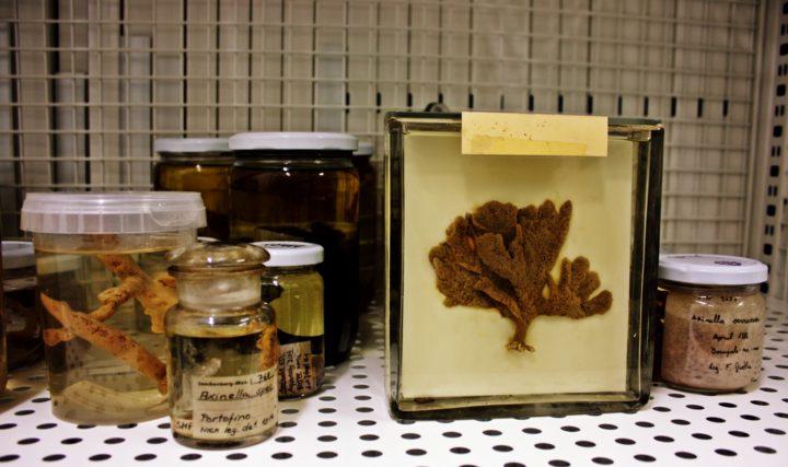 Porifera: