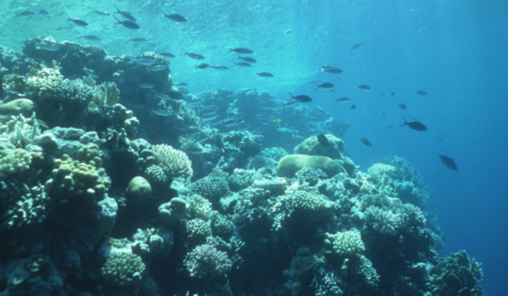 SBiKF_NWG_Warren_Korallenriff Sinai