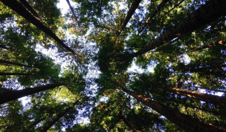 mögliches Teaserbild Bäume