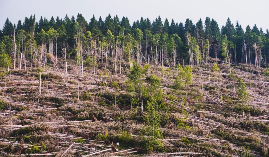 mögliches Teaserbild Biodiversity Conservation