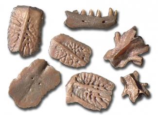 Wirbel und Hautknochenplatten von Reptilien
