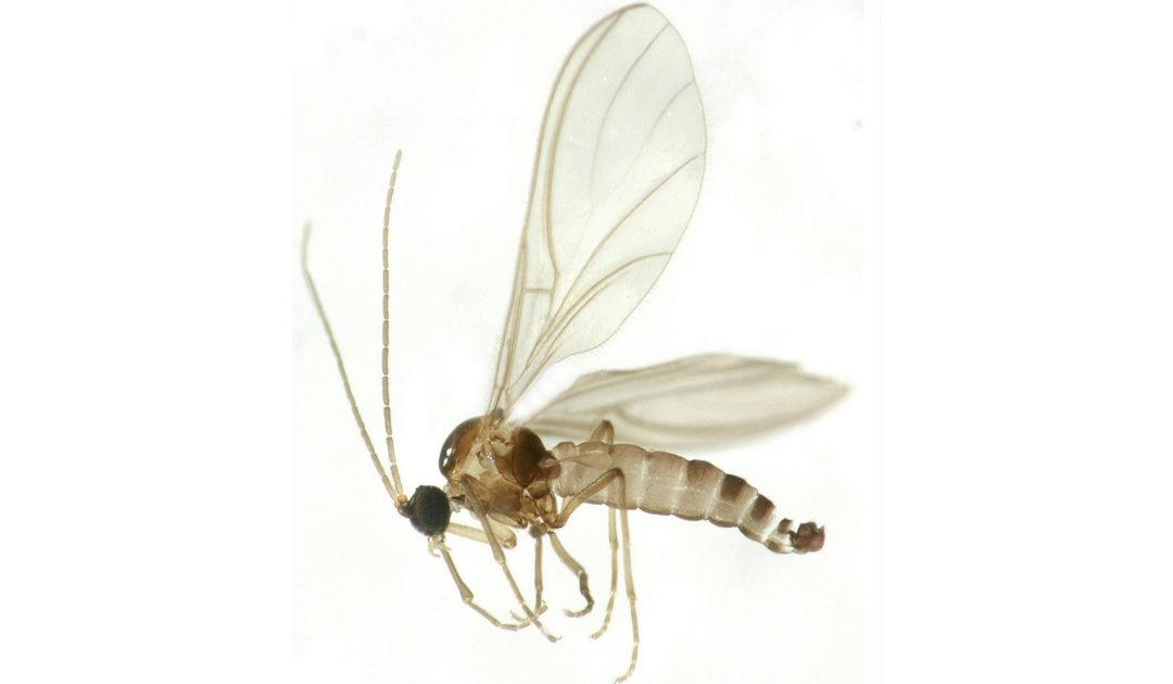Bilder Sektion Diptera