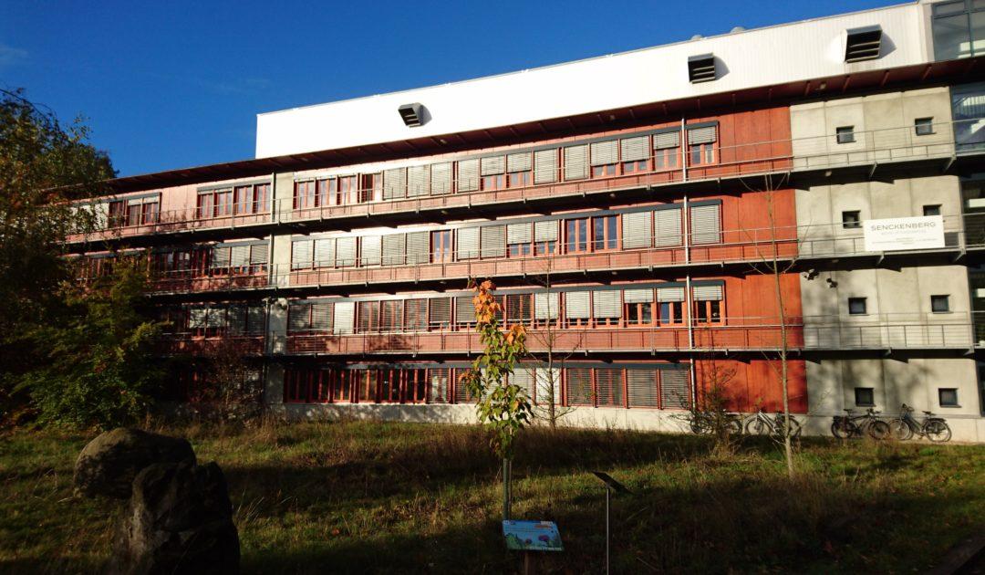 Senckenberg Naturhistorische Sammlungen Dresden, A.-B.-Meyer-Bau