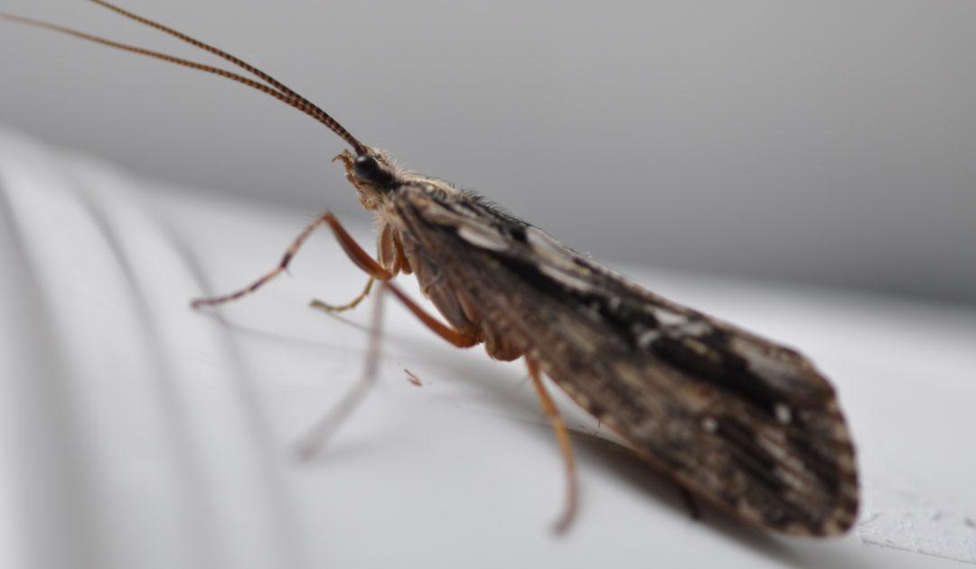 Fotos Entomologie III Frankfurt