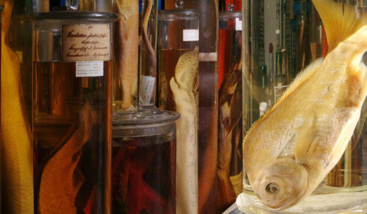 Ichthyologie