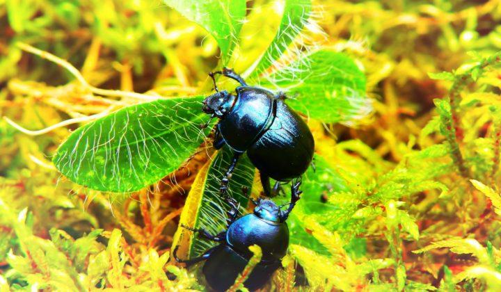 Käfer Entomologoie I
