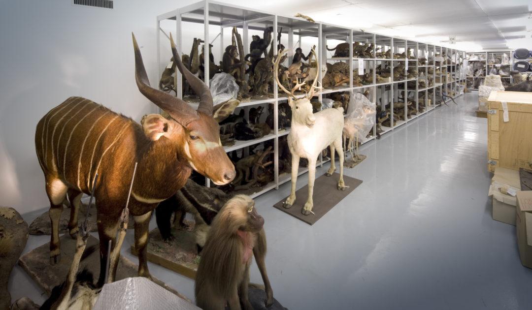 Mammalogie Sammlung