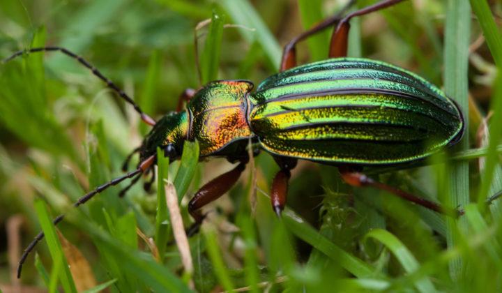 Projekt Insektenreich
