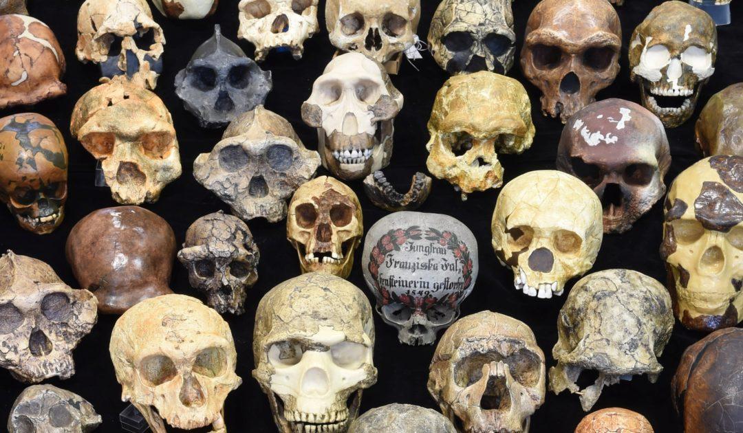 Schädel Anthropologie