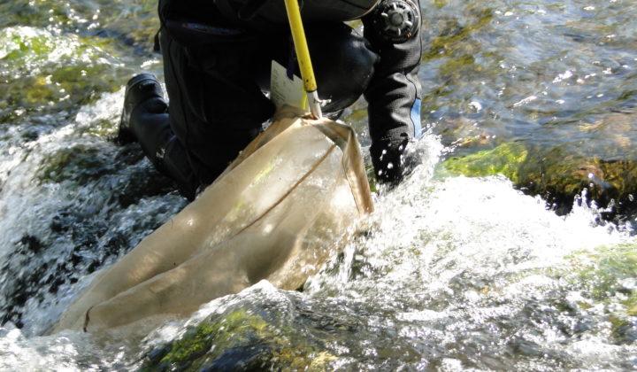 Fluss- und Auenökologie Forschung