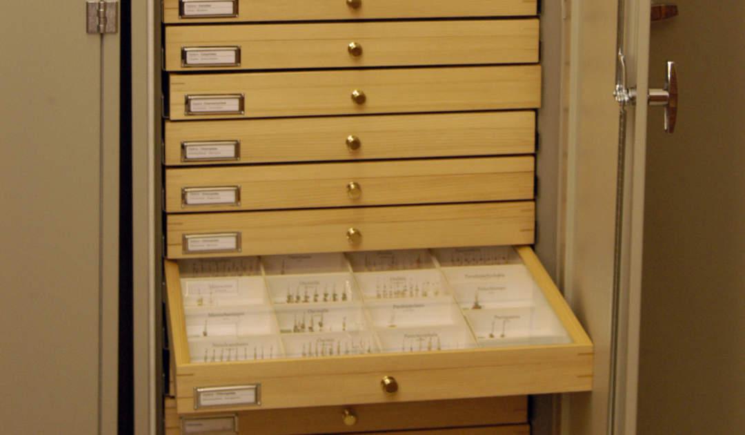 Senckenberg Naturhistorische Sammlungen Dresden