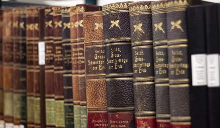Bibliothek Ansicht Dresden