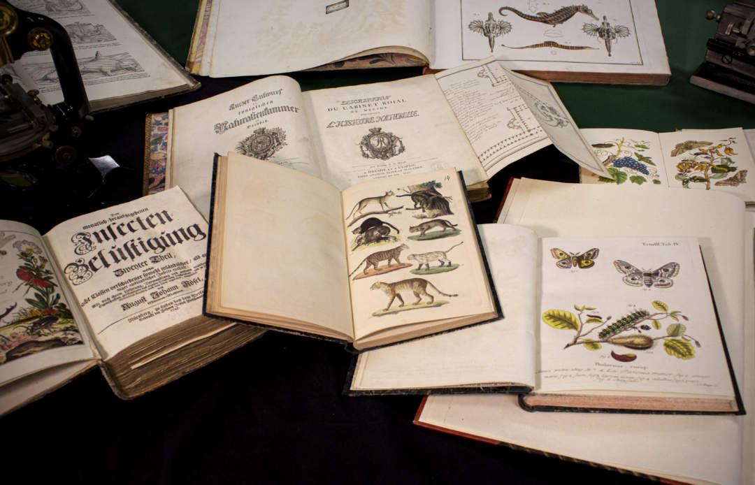 Bibliothek Ansicht Dresden Museum für Tierkunde