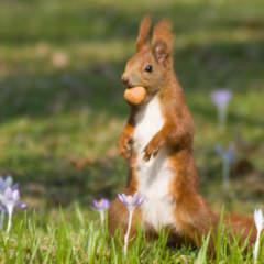 Eichhörnchen Frühjahr Programm SMNG 2020